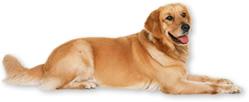 犬の皮膚病相談室